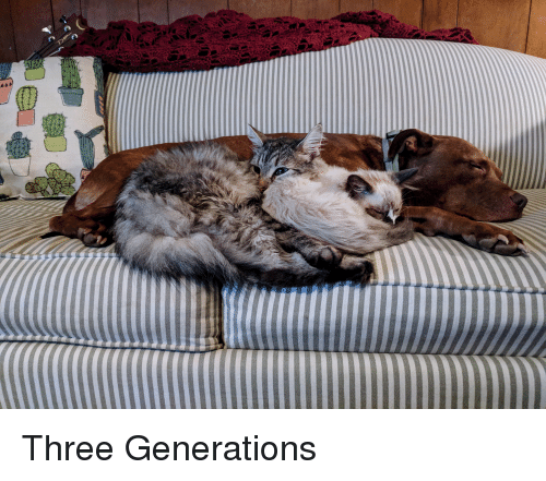 Three, Cuddling, and Generations: Three Generations
