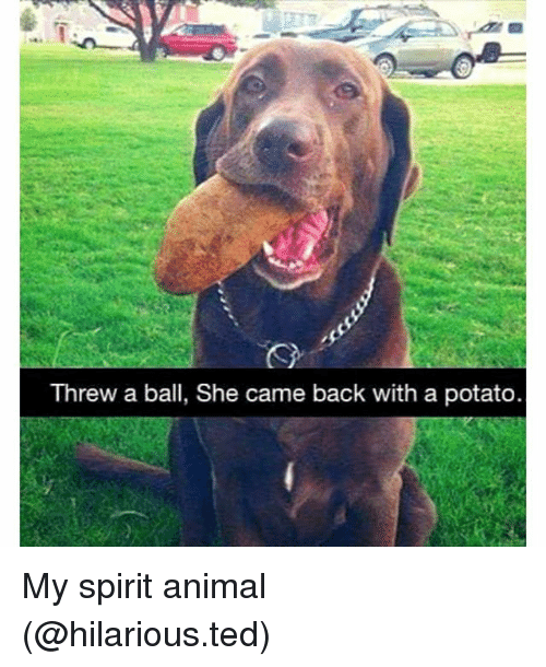 Funny, Ted, and Animal: Threw a ball, She came back with a potato. My spirit animal (@hilarious.ted)