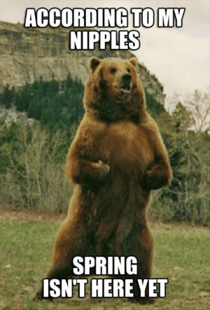 Funny Bear Pictures