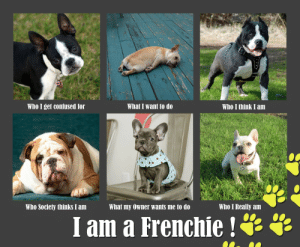 🐣 25+ Best Memes About French Bulldog Quotes | French ...