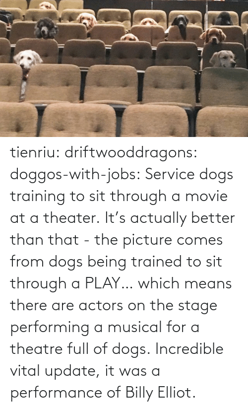 better than that: tienriu: driftwooddragons:  doggos-with-jobs: Service dogs training to sit through a movie at a theater. It's actually better than that - the picture comes from dogs being trained to sit through a PLAY… which means there are actors on the stage performing a musical for a theatre full of dogs.   Incredible vital update,  it was a performance of Billy Elliot.