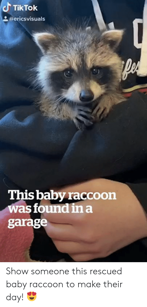 Raccoon, Baby, and Day: TikTok  aericsvisuals  This baby raccoon  was found ina  garage Show someone this rescued baby raccoon to make their day! 😍