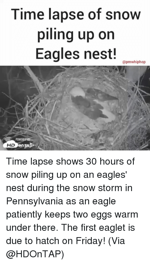 Memes, 🤖, and Storm: Time lapse of snow  piling up on  Eagles nest!  apmwhiphop  HD Time lapse shows 30 hours of snow piling up on an eagles' nest during the snow storm in Pennsylvania as an eagle patiently keeps two eggs warm under there. The first eaglet is due to hatch on Friday! (Via @HDOnTAP)