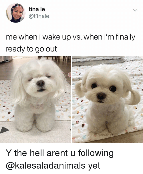 Memes, Hell, and 🤖: tina le  @t1nale  me when i wake up vs. when i'm finally  ready to go out Y the hell arent u following @kalesaladanimals yet