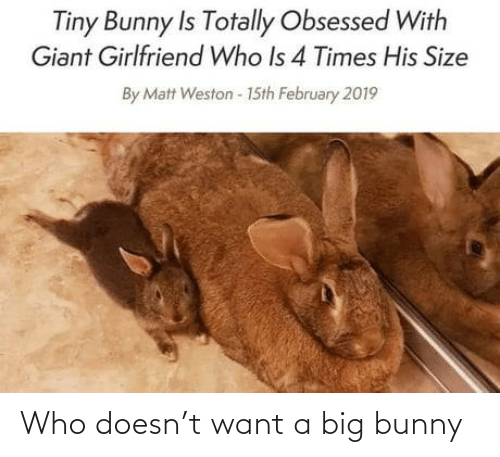 Matt: Tiny Bunny Is Totally Obsessed With  Giant Girlfriend Who Is 4 Times His Size  By Matt Weston - 15th February 2019 Who doesn't want a big bunny