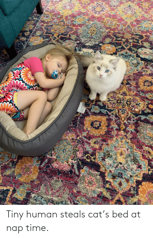 nap: Tiny human steals cat's bed at nap time.