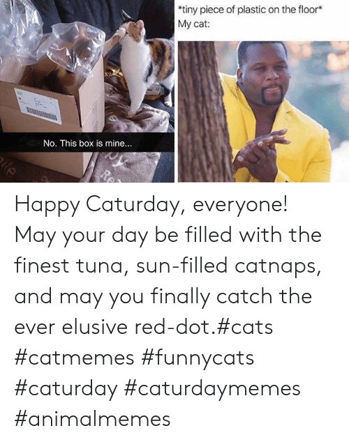 Cats, Caturday, and Happy: *tiny piece of plastic on the floor*  Му cat:  No. This box is mine....  Re Happy Caturday, everyone! May your day be filled with the finest tuna, sun-filled catnaps, and may you finally catch the ever elusive red-dot.#cats #catmemes #funnycats #caturday #caturdaymemes #animalmemes
