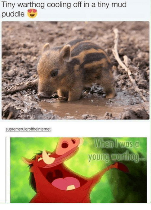 cooling-off: Tiny warthog cooling off in a tiny mud  puddle  supremeruleroftheinternet:  When Mas a  young  Wardiog