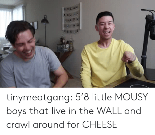 Tumblr, Blog, and Live: tinymeatgang:  5'8 little MOUSY boys that live in the WALL and crawl around for CHEESE