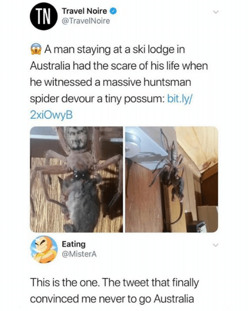 Life, Scare, and Spider: TN  Travel Noire  @TravelNoire  A man staying at a ski lodge in  Australia had the scare of his life when  he witnessed a massive huntsman  spider devour a tiny possum: bit.ly/  2xiOwyB  Eating  @MisterA  This is the one. The tweet that finally  convinced me never to go Australia