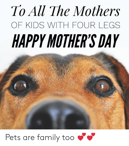 Happy Mothers Day: To All The Mothers  OF KIDS WITH FOUR LEGS  HAPPY MOTHER'S DAY Pets are family too 💕💕