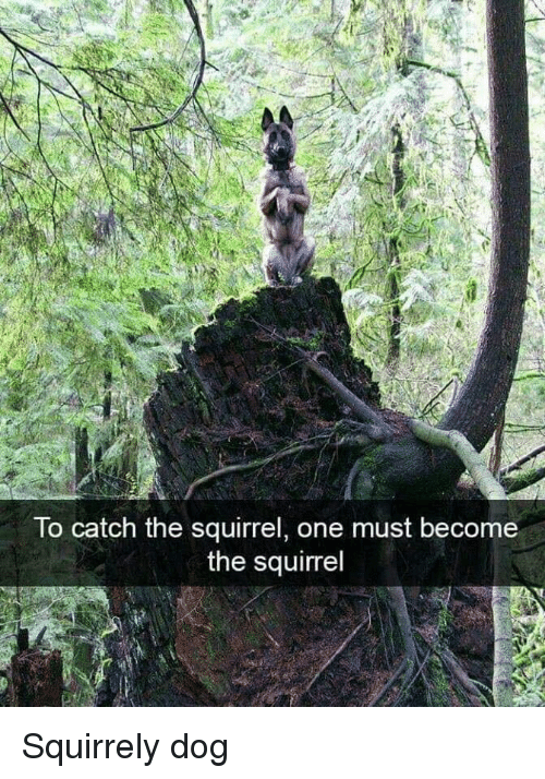 Squirrel, Dog, and One: To catch the squirrel, one must become  the squirrel Squirrely dog