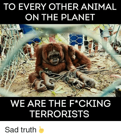 Anime On: TO EVERY OTHER ANIMAL  ON THE PLANET  WE ARE THE F*CKING  TERRORISTS Sad truth☝