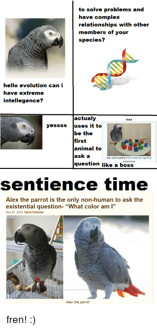 "Complex, Hello, and Relationships: to solve problems and  have complex  relationships with other  members of your  species?  hello evolution can i  have extreme  intellegence?  actualy  Alex  yessss uses it to  be the  first  animal to  ask a  question like a boss  Alex participating in a numerical cognition  experiment  sentience time  Alex the parrot is the only non-human to ask the  existential question- ""What color am ""  Nov 27, 2016 Tijana Radeska  Alex the parrot fren! :)"