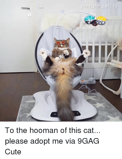 9gag, Cute, and Dank: To the hooman of this cat... please adopt me  via 9GAG Cute