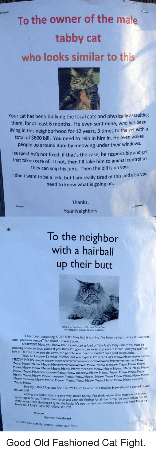 "cat fight: To the owner of the male  tabby cat  who looks similar to this  Your cat has been bullying the local cats and physically assaulting  them, for at least 6 months. He even sent mine, who has been  living in this neighborhood for 12 years, 3 times to the vet with a  total of $800 bill. You need to rein in him in. He even wakes  people up around 4am by meowing under their windows.  I suspect he's not fixed, if that's the case, be responsible and get  that taken care of. If not, then I'll take him to animal control so  they can snip his junk. Then the bill is on you  ant to be a jerk, but I am really tired of this and also you  need to know what is going on  Thanks  Your Neighbors  To the neighbor  with a hairball  up their butt  (This is my headshot, corflicts are Fancy Feast  and Petco, also, available for paw modeling)  your 'precaug reen ssaulting No8oDr They had it coming Iive been trying to work this out weh  I ain't been assaulting NOBODY! They had it coming, I've been trying to work this out with  $800!!!!I Now you know that's a whopping load of Tidy Cat's Kitty Litter! You must be  Yeah, so I meow. So what??? What did you expect? I'm a cat. Cat's meow. Meow meow meow...  rescue"" for about 10 years now.  smoking some serious catnip if you think I'm gonna paw over that kind of kibble. And you said""rein  him in."" Is that how you tie down the people you  meet on tinder? I'm a wild animal, baby  MEOW MEOW meow meow m  Meow Meow Meow. Meow. Mrrrrrrrrrrrrooowwww.  Meow. Meow  Meow. Meow  Meow. Meow. Meow. Meow meeeow.  Meow  Meow. Meow.  Mcow  Meow Meow meeeow. Meow. Meow. Meow.  Meow Meow. Meow. Meow. Meow meeeow Meow. Meow. Meow.  Meow. Meow Meow  Meow meeeow. Meow. Meow. Meow. Meow. Meow Meow  Heow Meow Mwoweow  Meow. Meow. Meow. Meow Meow Meow Meow. Meow. Meow.  meeeow. Meow. Meow. Meow. Meow. Meow Meow Meow. Meow. Meow. Meow meeeow.  Snip my JUNK? Are you For Real?2m Don't fix what isn't broken. How else am I s'posed to wet  Calling the authorities is a two way street, honey. You think  my whistle?  little pussy's nos  you're little pussy's nose is clean?  e them drug test your old fleabag for all the catnip I've been dishing him all  the habit ie's not my fault he's become such a nip head. This is my  a  thee years Sster ril have them drue way street honey You think  block and IAIN'T GOING NOWHERE!!!!  Sherman Greybeard  ps. I left you a smelly present under your Prius. <p>Good Old Fashioned Cat Fight.</p>"