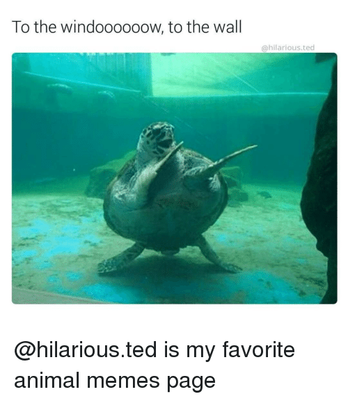 Animals Meme: To the windoooooow, to the wall  hilarious ted @hilarious.ted is my favorite animal memes page