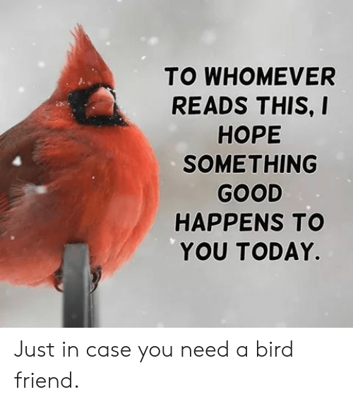 just in case: TO WHOMEVER  READS THIS, I  НОРЕ  SOMETHING  GOOD  HAPPENS TO  YOU TODAY. Just in case you need a bird friend.