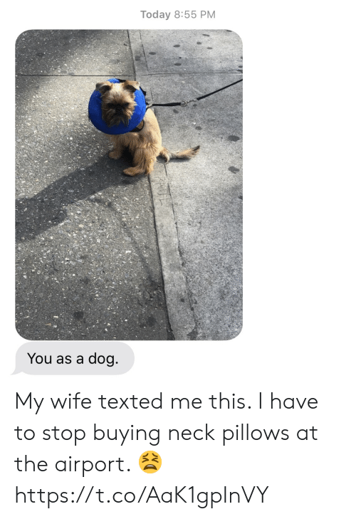 Memes, Today, and Wife: Today 8:55 PM  You as a dog My wife texted me this.  I have to stop buying neck pillows at the airport. 😫 https://t.co/AaK1gpInVY