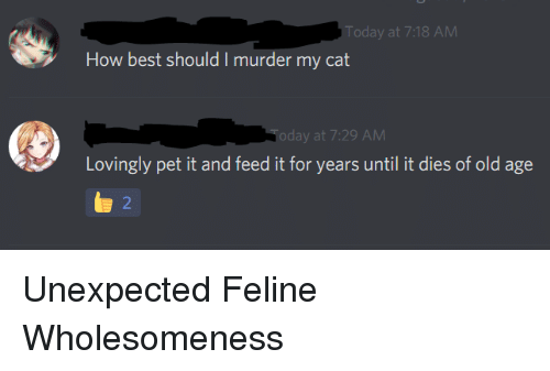 Best, Today, and Old: Today at 7:18 AM  How best should I murder my cat  oday at 7:29 AM  Lovingly pet it and feed it for years until it dies of old age  2 Unexpected Feline Wholesomeness