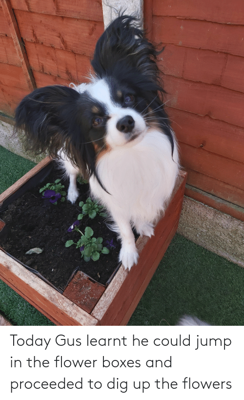 Aww Memes: Today Gus learnt he could jump in the flower boxes and proceeded to dig up the flowers