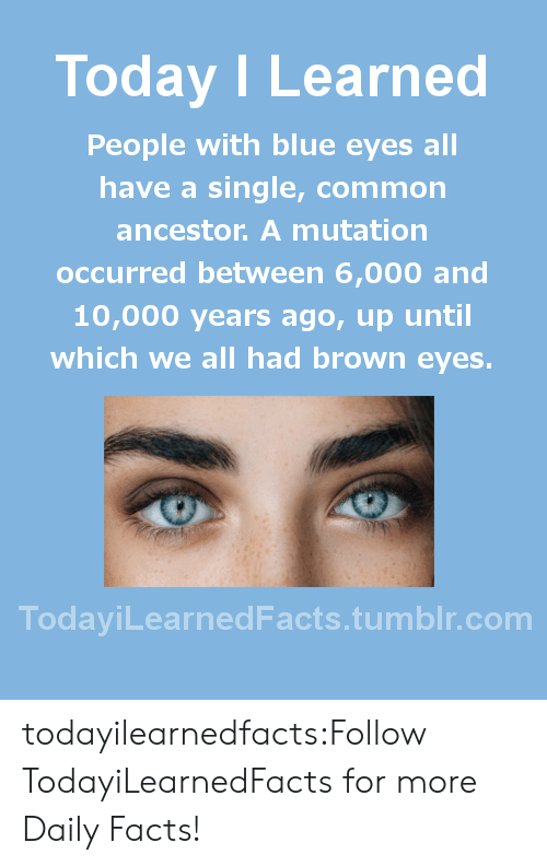 Today I Learned People With Blue Eyes All Have a Single Common
