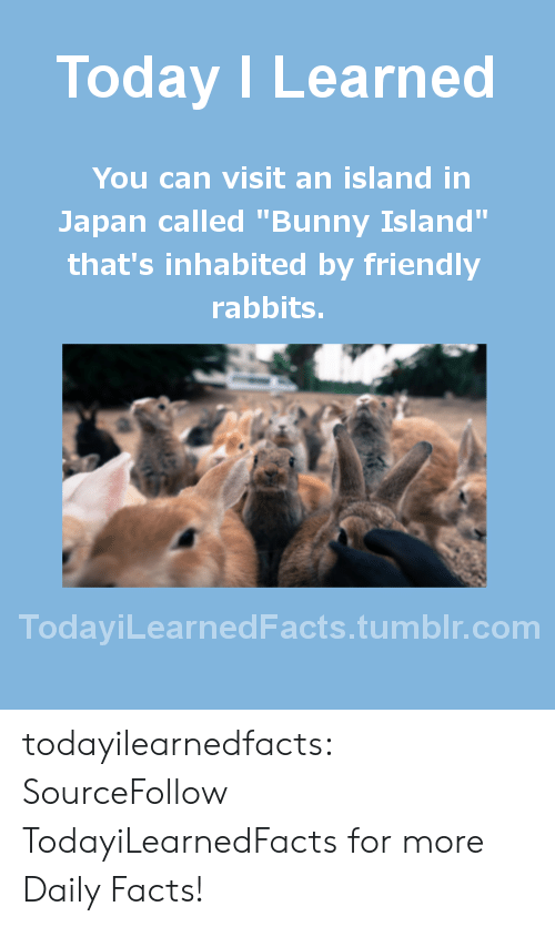 """Bunnies, Facts, and Gif: Today I Learned  You can visit an island in  Japan called """"Bunny Island""""  that's inhabited by friendly  rabbits.  TodaviLearned Facts.tumblr.com todayilearnedfacts:  SourceFollow TodayiLearnedFacts for more Daily Facts!"""