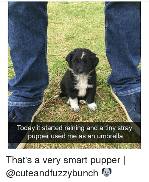 Smarts: Today it started raining and a tiny stray  pupper used me as an umbrella That's a very smart pupper | @cuteandfuzzybunch 🐶