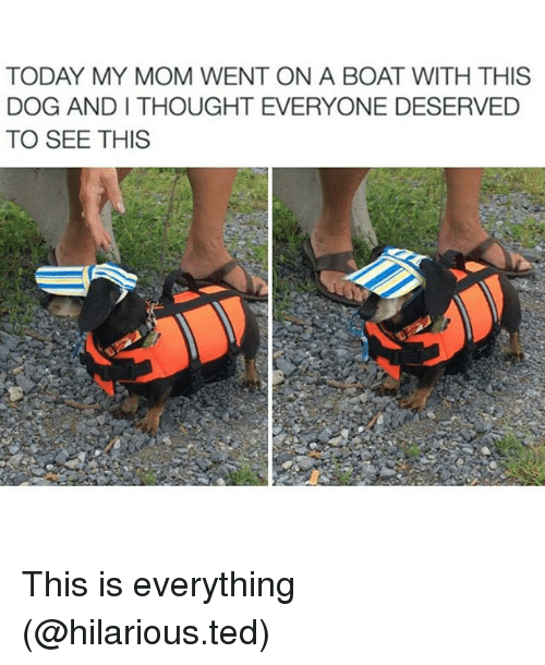 withings: TODAY MY MOM WENT ON A BOAT WITH THIS  DOG ANDI THOUGHT EVERYONE DESERVED  TO SEE THIS This is everything (@hilarious.ted)