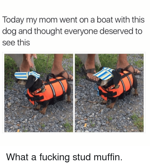 Dogs, Fucking, and Funny: Today my mom went on a boat with this  dog and thought everyone deserved to  see this What a fucking stud muffin.