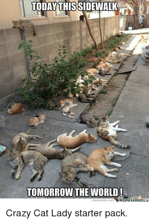 crazy cats: TODAY THISSIDEWALK  TOMORROW THE WORLD!  iMtmeCenler  memecenter com Crazy Cat Lady starter pack.