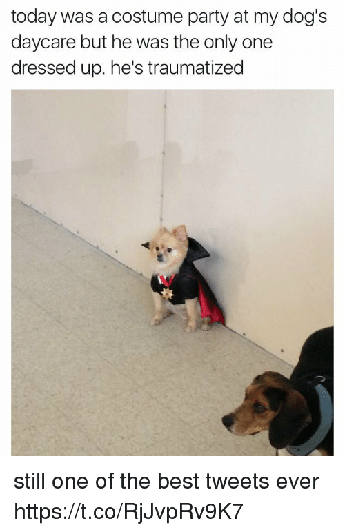 Dogs, Party, and Best: today was a costume party at my dog's  daycare but he was the only one  dressed up. he's traumatized still one of the best tweets ever https://t.co/RjJvpRv9K7