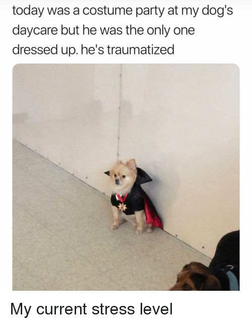Stress Level: today was a costume party at my dog's  daycare but he was the only one  dressed up. he's traumatized My current stress level