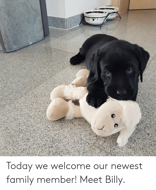 labrador: Today we welcome our newest family member! Meet Billy.