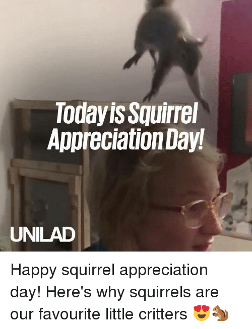 Dank, Happy, and Squirrel: Todayis Squirrel  Appreciation Day!  UNILAD Happy squirrel appreciation day! Here's why squirrels are our favourite little critters 😍🐿