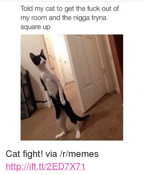 "Memes, Square Up, and Http: Told my cat to get the fuck out of  my room and the nigga tryna  square up <p>Cat fight! via /r/memes <a href=""http://ift.tt/2ED7X71"">http://ift.tt/2ED7X71</a></p>"