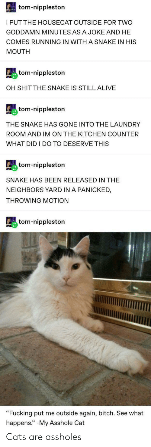 "motion: tom-nippleston  I PUTTHE HOUSECAT OUTSIDE FOR TWO  GODDAMN MINUTES ASA JOKE AND HE  COMES RUNNING IN WITH A SNAKE IN HIS  MOUTH  tom-nippleston  OH SHIT THE SNAKE IS STILL ALIVE  tom-nippleston  THE SNAKE HAS GONE INTO THE LAUNDRY  ROOM AND IM ON THE KITCHEN COUNTER  WHAT DID I DO TO DESERVE THIS  tom-nippleston  SNAKE HAS BEEN RELEASED IN THE  NEIGHBORS YARD IN A PANICKED  THROWING MOTION  tom-nippleston  ""Fucking put me outside again, bitch. See what  happens."" -My Asshole Cat Cats are assholes"