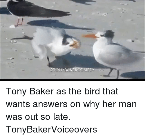 Ðÿ'©: TONY BAKER  DY Tony Baker as the bird that wants answers on why her man was out so late. TonyBakerVoiceovers
