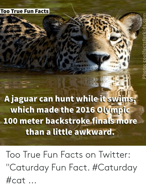 "Caturday Cat: Too True Fun Facts  Ajaguar can hunt while it swims,  which made the 2016 Olympic  100 meter backstroke finals more  than a little awkward  1L Too True Fun Facts on Twitter: ""Caturday Fun Fact. #Caturday #cat ..."