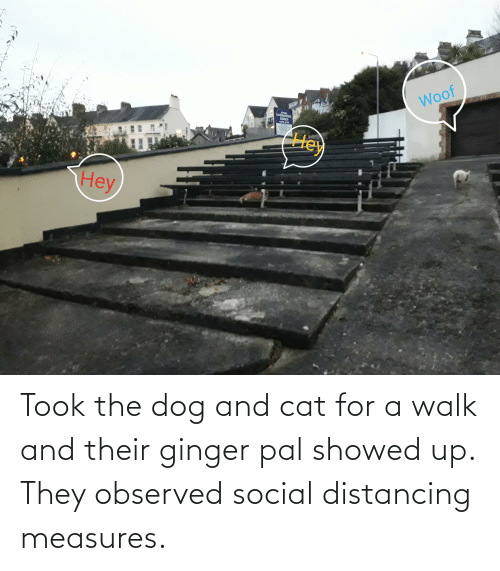 ginger: Took the dog and cat for a walk and their ginger pal showed up. They observed social distancing measures.