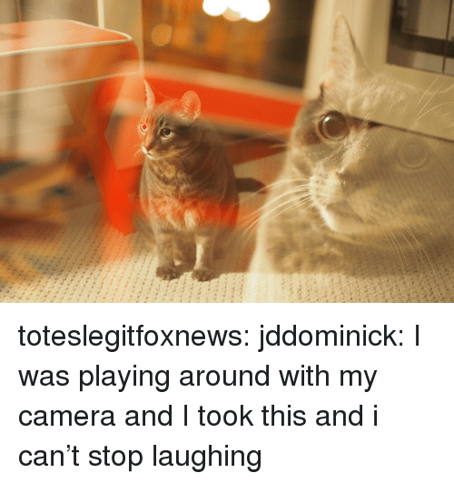 Tumblr, Blog, and Camera: toteslegitfoxnews:  jddominick: I was playing around with my camera and I took this and i can't stop laughing