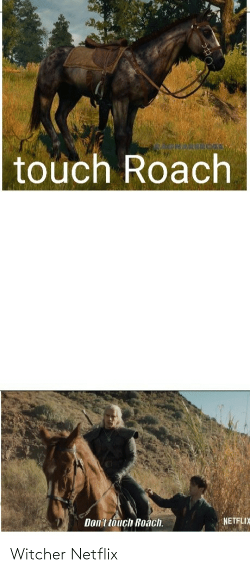 witcher: touch Roach  Don't touch Roach.  NETFLIX Witcher Netflix