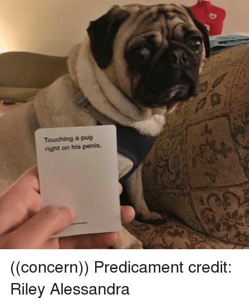 Penis, Pug, and Right: Touching a pug  right on his penis ((concern))  Predicament credit: Riley Alessandra