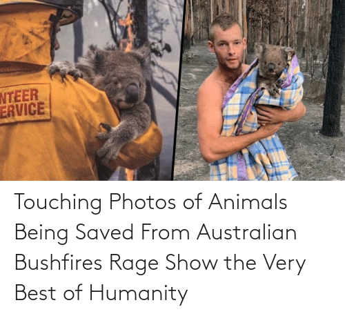 rage: Touching Photos of Animals Being Saved From Australian Bushfires Rage Show the Very Best of Humanity