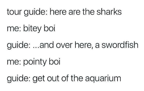 Aquarium, Sharks, and Dank Memes: tour guide: here are the sharks  me: bitey boi  guide: ...and over here, a swordfish  me: pointy boi  guide: get out of the aquarium