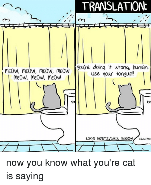 Buzzfeed, Translation, and Relatable: TRANSLATION  youre doing it wrong, human  MEOW, MEOW, MEOW, MEOW  use your tonguell  MEOW, MEOW, MEOW  LORNN BRANTZ/CAROL BERKOW  BUZZFEED now you know what you're cat is saying