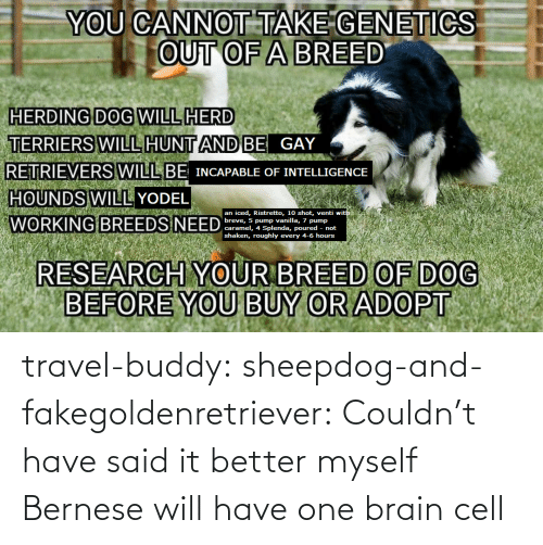 Said It: travel-buddy:  sheepdog-and-fakegoldenretriever:  Couldn't have said it better myself   Bernese will have one brain cell
