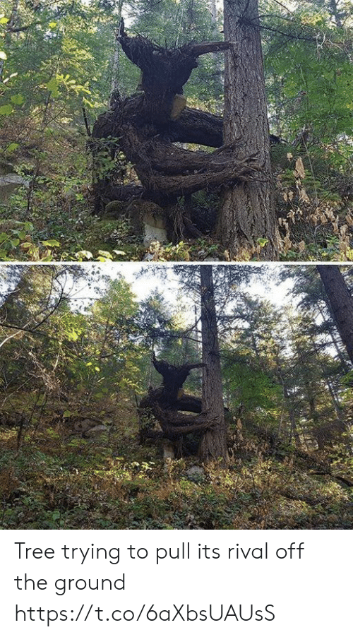Rival: Tree trying to pull its rival off the ground https://t.co/6aXbsUAUsS