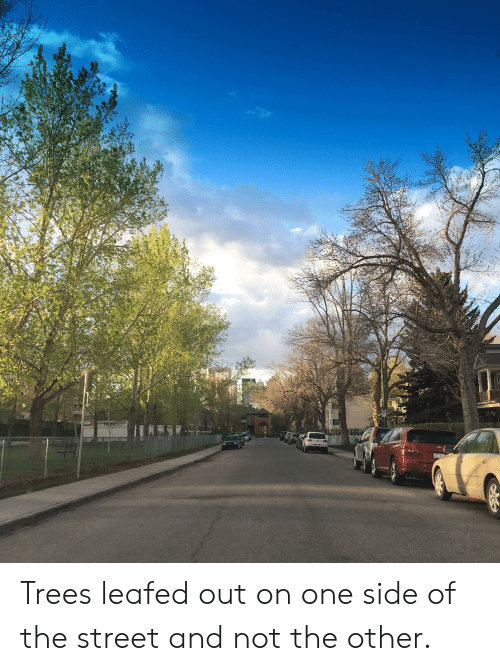 Trees, One, and The Street: Trees leafed out on one side of the street and not the other.