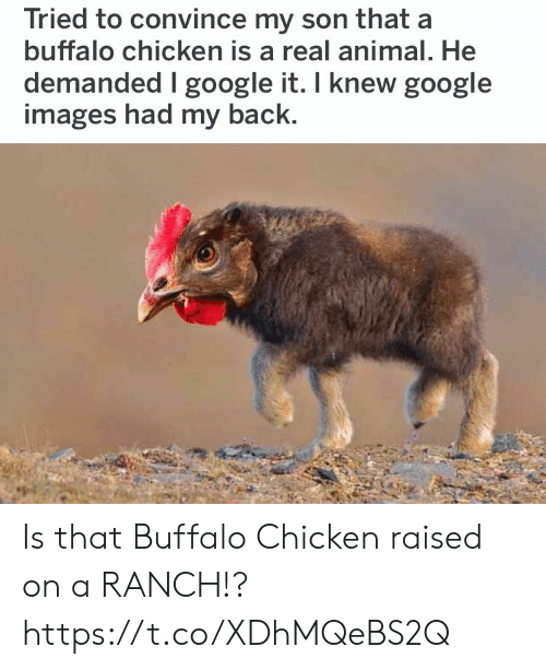 Funny, Google, and Animal: Tried to convince my son that a  buffalo chicken is a real animal. He  demanded I google it. I knew google  images had my back. Is that Buffalo Chicken raised on a RANCH!? https://t.co/XDhMQeBS2Q